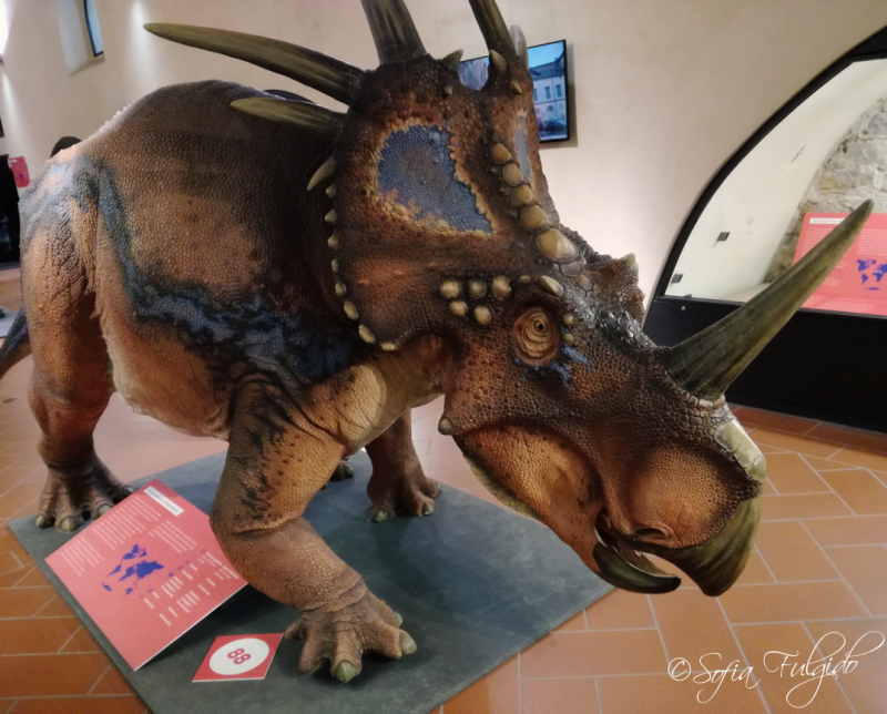 styracosaurus_dinosauri_al_museo_caffi_bergamo